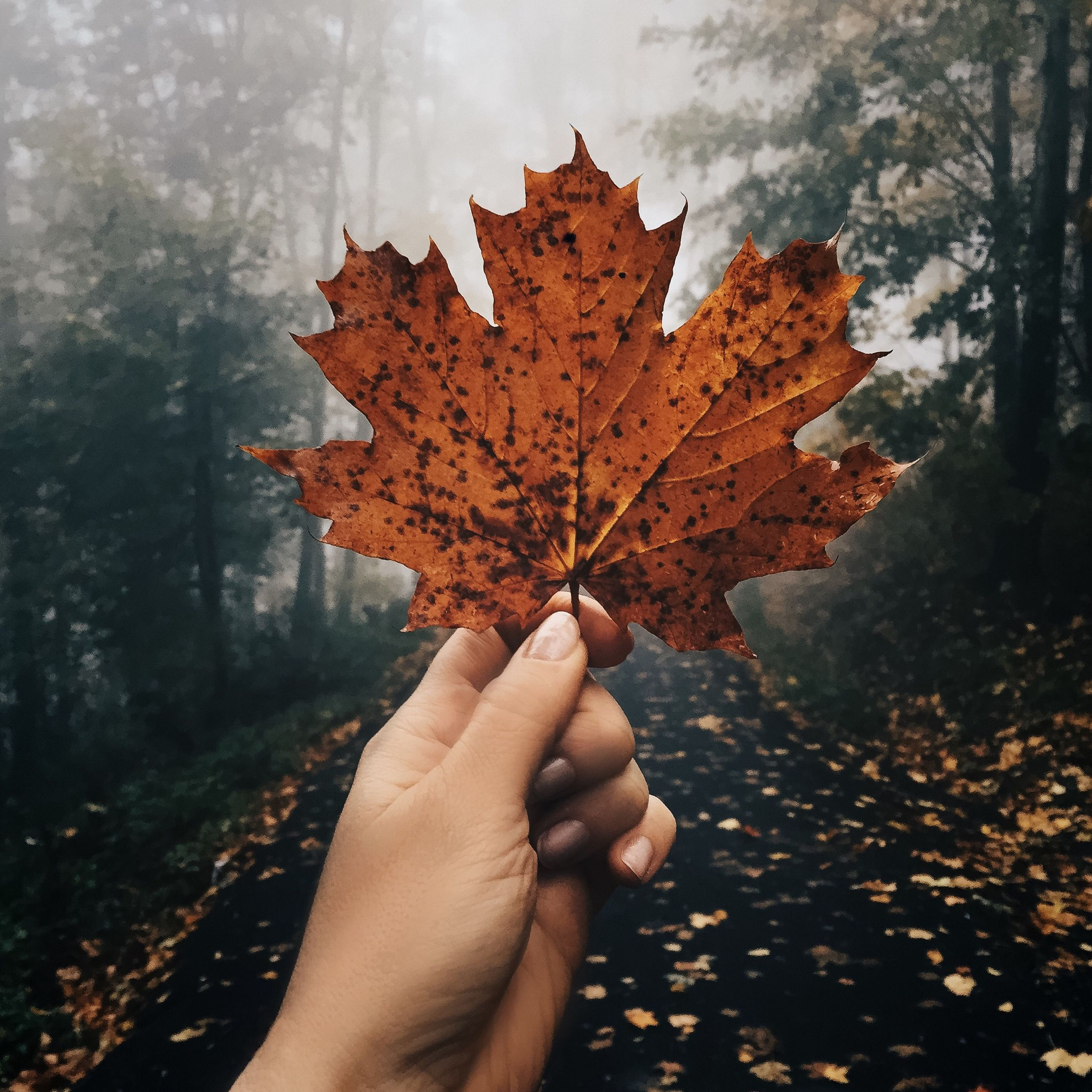 autumn, leaf, change, maple leaf, nature, maple, outdoors, human hand, tree, only women, personal perspective, leisure activity, day, one person, human body part, real people, lifestyles, adults only, scenics, close-up, beauty in nature, one woman only, people, one young woman only, adult