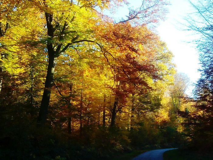 forêt de Normandie