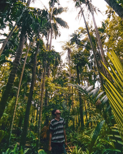 Man standing by palm trees in forest