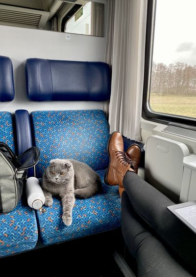High angle view of dog sitting in train