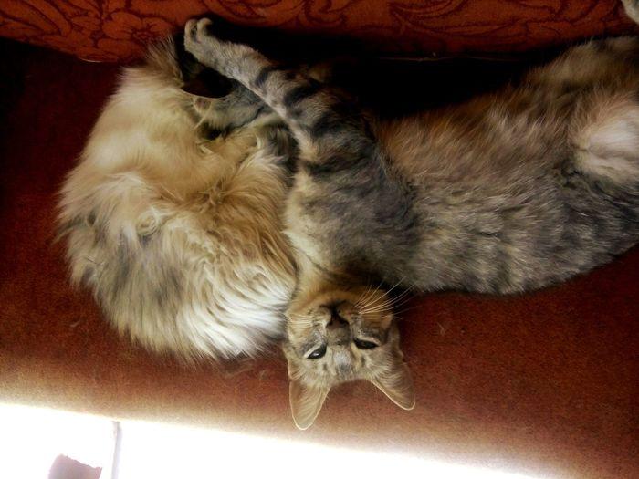 Leila & Tekila