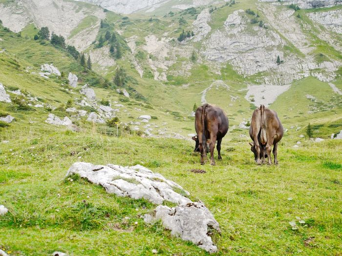 Horses grazing on landscape against mountain