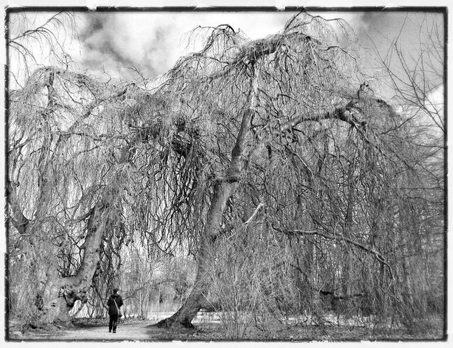 Blackandwhite Black And White Walking Alone... TreePorn Walking Away Get Lost