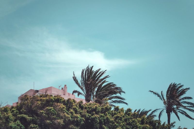 Low angle view of palm trees and plants against sky
