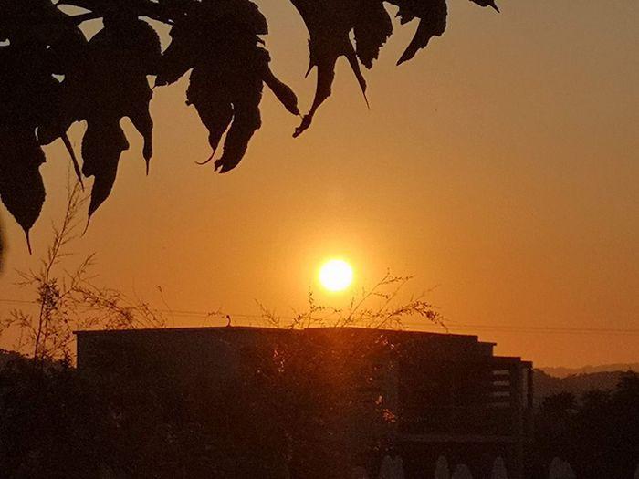 Silhouette tree by building against orange sky