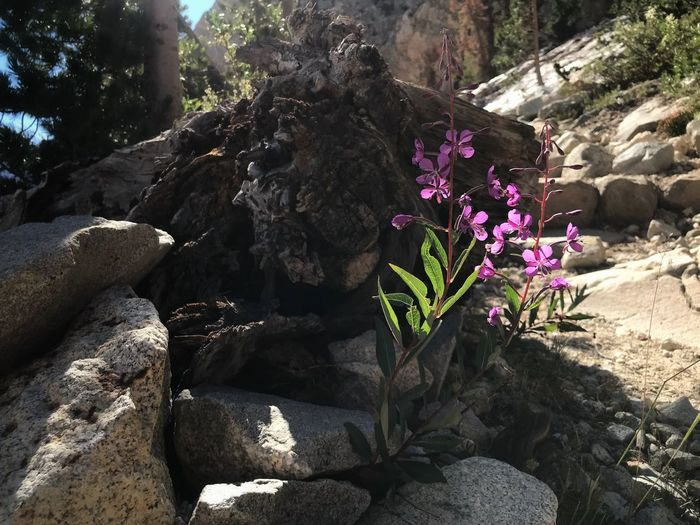 Close-up of flowering plants by rocks