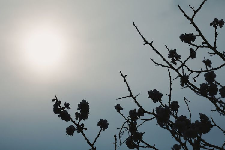 Streetphotography Sky Plant Tree Low Angle View Nature Silhouette Branch Beauty In Nature No People Growth Day Clear Sky Outdoors