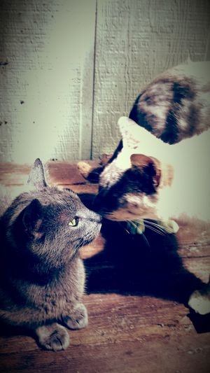 Cat♡ Kittys  Cat Love