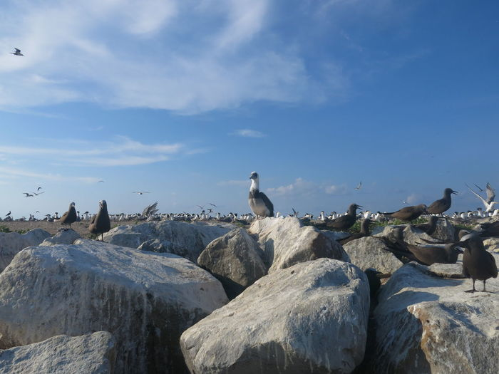 Seagulls perching on rock formation against sky
