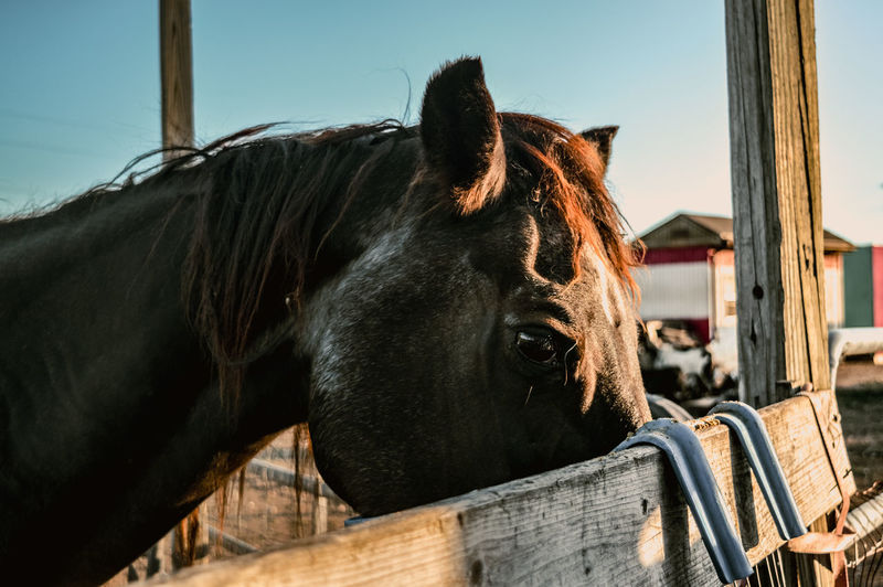 Horse eating at a farm during sunset in killeen, texas