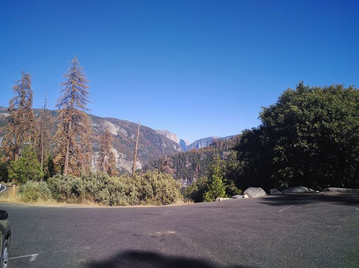 Tree Sky Clear Sky Landscape No People Day Nature Outdoors Half Dome Yosemite National Park California