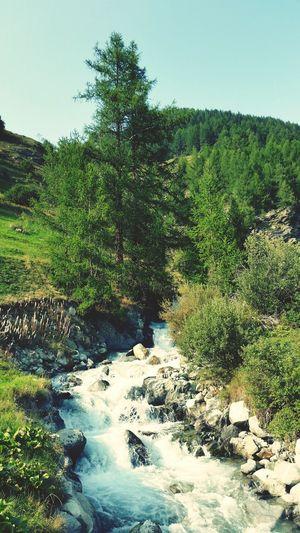 Water Tree Nature No People Outdoors Beauty In Nature Sky Switzerland Lötschental