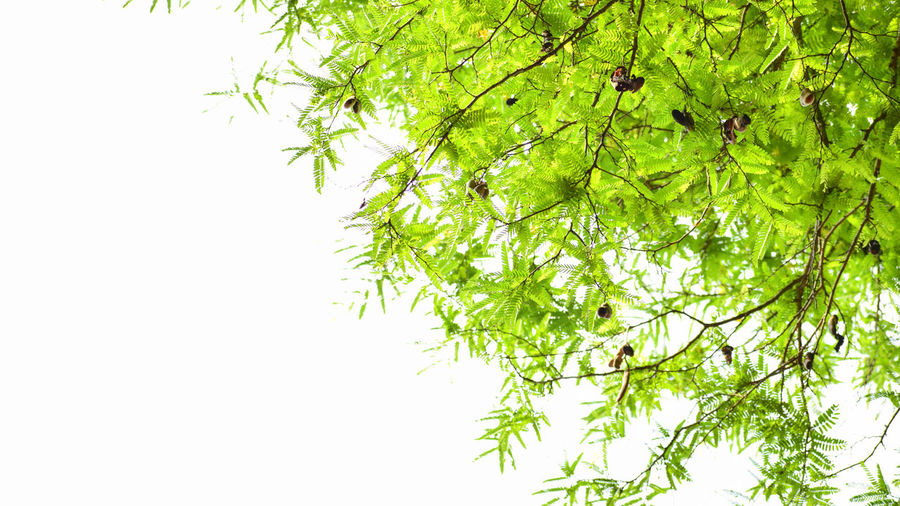 Beautyful greenary Nature Tree Branch Green Color Plant Leaf Forest Backgrounds Outdoors Beauty In Nature No People Day Wildfire Freshness EyeEmNewHere EyeEm Diversity EyeEmNewHere
