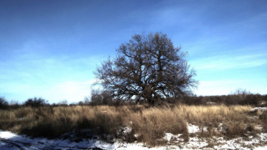 Дерево, Nature Tree Sky Blue No People Outdoors Day Beauty In Nature Nature, Дуб