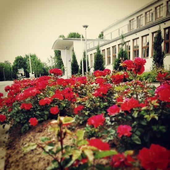Vatertag Festhalle  Rosen Zweibrücken