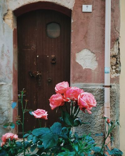Outdoors Flower Architecture Built Structure No People Building Exterior Flower Head Beauty Of Nature Natureza Sardegna Cagliari Tranquility The Secret Spaces Beauty In Nature Architecture_collection Doorporn DoorsAndWindowsProject City Life Sardinia Cerdeña People Flowerporn Flowers Decay The Great Outdoors - 2017 EyeEm Awards