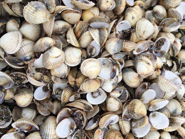 Shell Shells Shellsheddyphotography Mussels Seashell Sea Seashells Northsea Sand Sand Dune Beach Beachphotography Winter Wintertime Nature Animals Animal North Sea Nature Photography Walking Around Relaxing Traveling EyeEm Best Shots IPhoneography