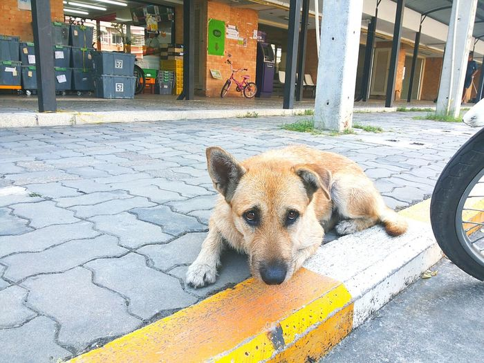 Are you alone ? Summer Dogs Dog Thailand EyeEm Animal Lover