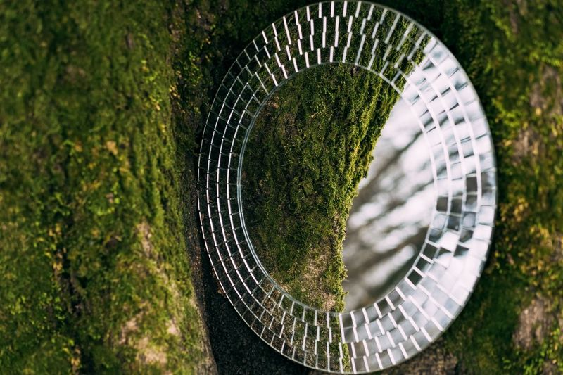 Moss Nature Beauty In Nature Mirror Mirror Reflection Reflection Green Color Green Tree Tree Trunk Mossy Tree Moss-covered Round Mirror Round No People Round Shape Visual Creativity The Still Life Photographer - 2018 EyeEm Awards The Creative - 2018 EyeEm Awards