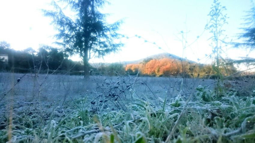 Freezing ❄ Grass Beauty In Nature Morning Walk