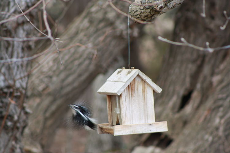 Bird Photography Actionshot Animal Animal Themes Animal Wildlife Animals In The Wild Bird Bird Feeder Birdhouse Birdhouses Branch Day Focus On Foreground Hanging Inflight Nature Naturelovers No People One Animal Outdoors Plant Selective Focus Tree Vertebrate Wood - Material