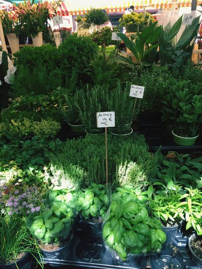 Plants and vegetables for sale at market stall