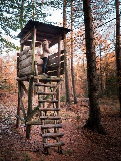 Girl in on a perch Trees Discover  Hike Roam Explore Autumn Live Real People Live Authentic Outdoors Girl Hunting Perch Tree Wood - Material Day Forest No People Full Length Outdoors Nature