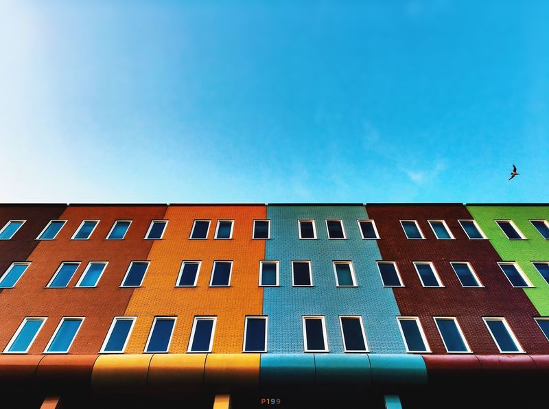 Bird. P199 Onephotoaday IPhoneography 365project2016 Architecture Architecture_collection Lookingup Brick Wall Colors Colorful Low Angle View Sky Blue Sky Bird Seagull Windows