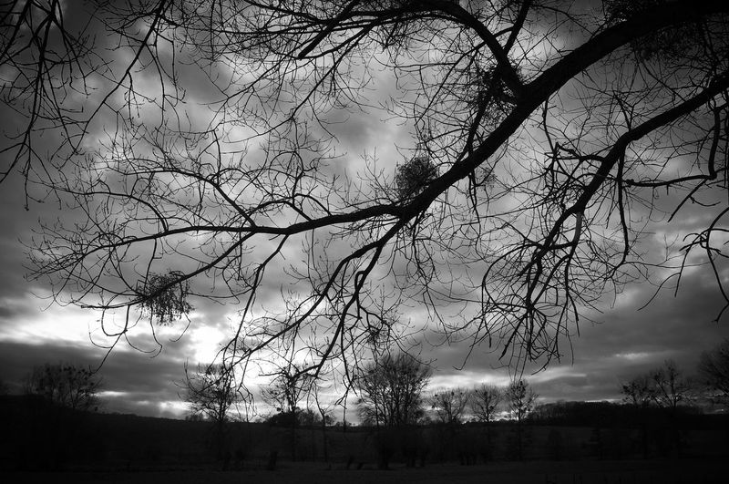 Tree Sky Cloud - Sky Bare Tree Tranquility Beauty In Nature Tranquil Scene Plant No People Nature Scenics - Nature Land Environment Landscape Branch Silhouette Non-urban Scene Field Outdoors