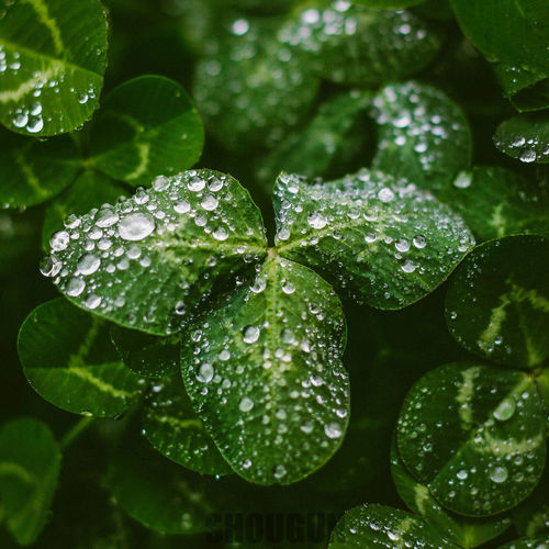 Beauty In Nature Green Color Growth Nature Rain Water Wet