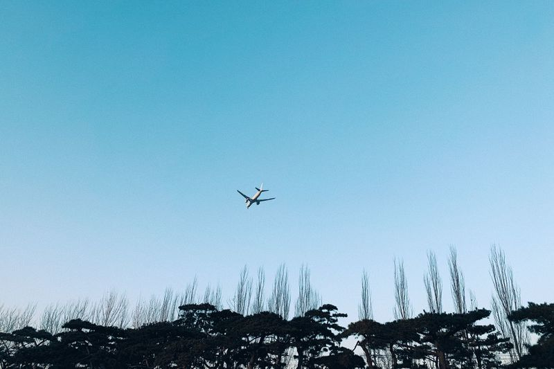 Sky Tree Flying Low Angle View Airplane