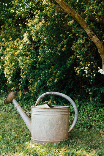 Garden Gardening Gardening Equipment Domestic Garden Spring Springtime Hose Watering Can Iron Hose Metallic Hose Old The Past Vintage Drought Dryness Plant Tree Nature Grass Day Growth Metal No People Green Color Outdoors Front Or Back Yard Agriculture Container Lawn Bush Land Rural Scene
