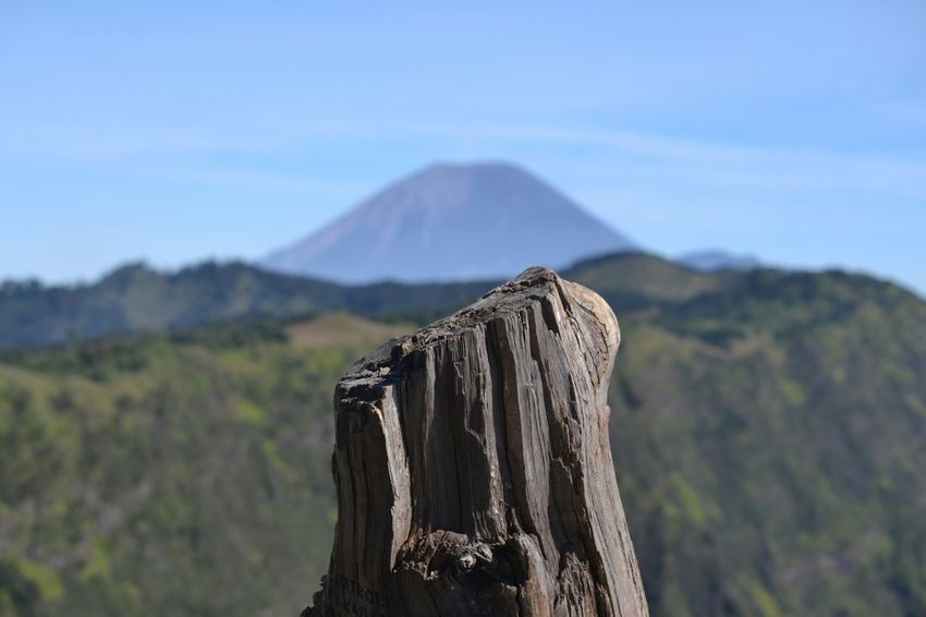The Adventure Handbook Dead Wood at B30 Hill with Background of Mount Semeru