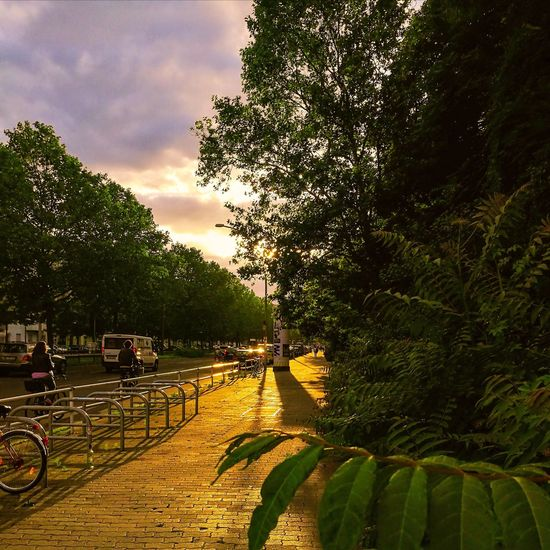 View of footpath in park against cloudy sky
