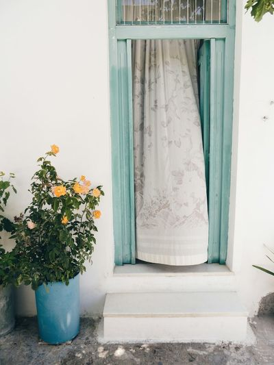 Streetphotography That Moment Curtain Roses Frontdoor Pastel Power Fine Art Photography