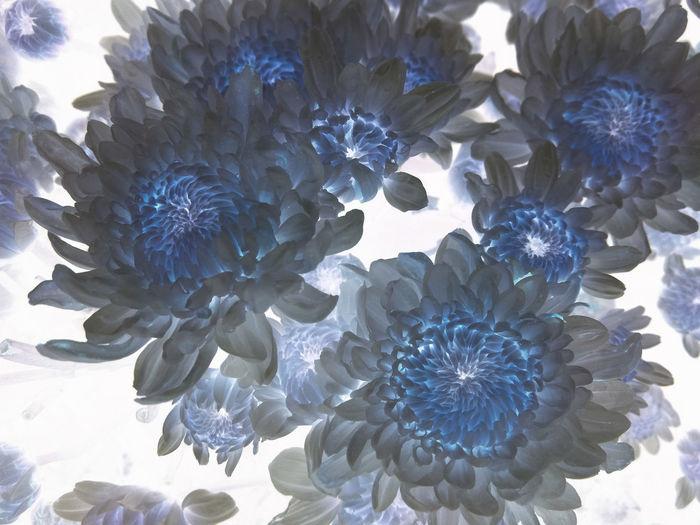 Blue Full Frame