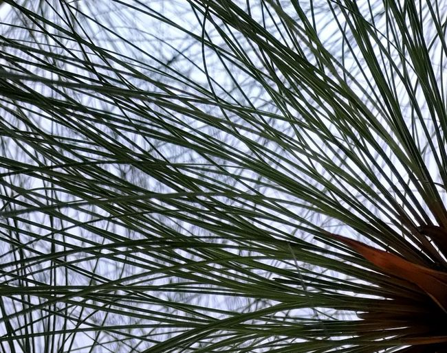 Low Angle View Nature Growth Tree Day Palm Tree Full Frame Beauty In Nature No People Sky Outdoors Backgrounds Branch Close-up The Week On EyeEm