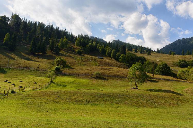 Transrarau Beauty In Nature Cloud Cloud - Sky Field Grass Grassy Green Color Growth Hill Idyllic Landscape Mountain Nature Non-urban Scene Rural Scene Scenics Sky Tranquil Scene Tranquility Tree
