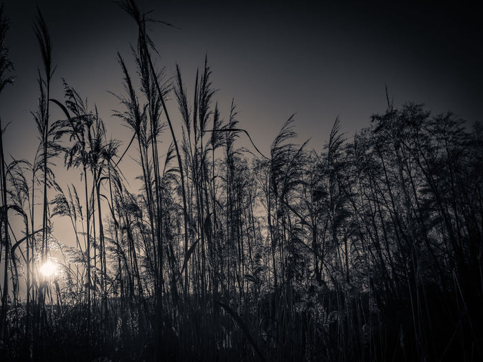 Atmosphere Blackandwhite Grass Lake View Monochrome Mystery Nature Outdoors Sea Silouhette Sun Sunrise... Olympus OM-D E-M5 Mk.II