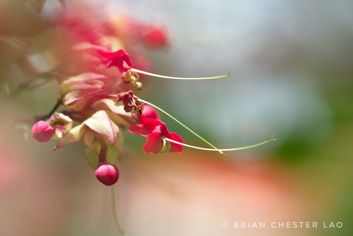 Cycle of Life Nature Nature Photography Wildlife Photography Flowers Bleeding Heart Flowers Bleeding Heart  Bleedinghearts Bleeding Hearts Flower Flower Head Tree Branch Red Springtime Beauty Close-up Plant Plant Life Stamen In Bloom Blossom Softness Focus