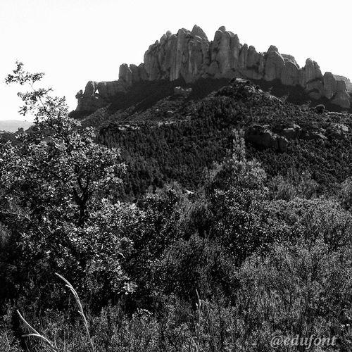 Montserrat , amb la Roca Foradasa , des del coll de Can Massana. Bages Catalunya BN bw clikcat paisatges landscapes catalunyaexperience gaudeix_cat descobreixcatalunya igerscatalunya