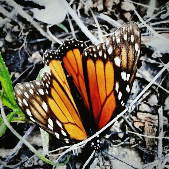 MariposaMonarca Mexico Michoacan, México By:lu Nature Beauty In Nature Beautiful ♥ Natural