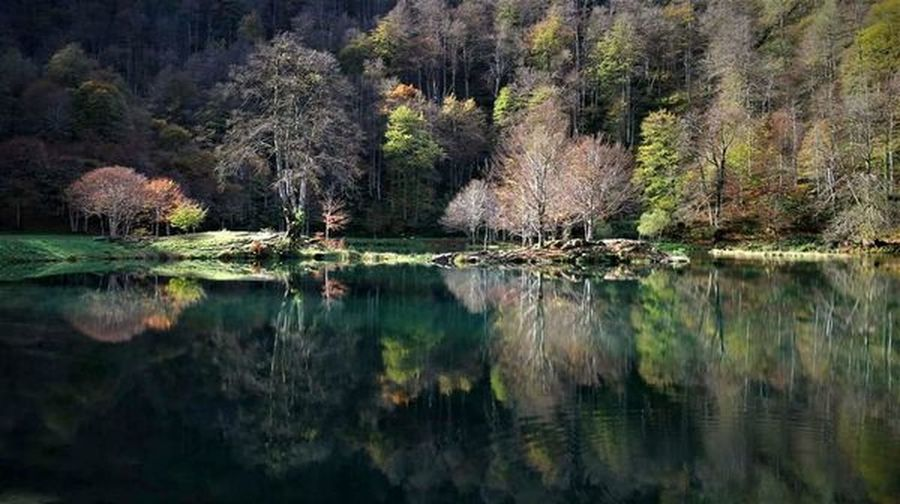 Tree Reflection Lake Water Nature Beauty In Nature Outdoors No People Tranquility Growth Day Flower Sky Pyrenees France🇫🇷 Ariege Ariégeois View Occitanie Mountains Toulousephotographer Hiking Mountain Scenics Nature