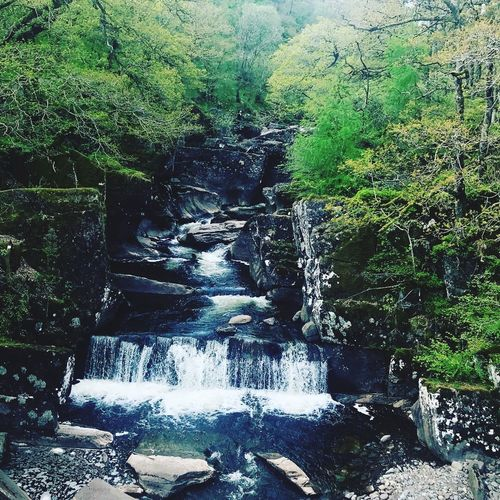Trossachs National Park Plant Tree Water Nature No People Day Growth Foliage Motion Tranquil Scene Land Non-urban Scene Tranquility Scenics - Nature Beauty In Nature Green Color Forest Outdoors Sunlight Flowing Water