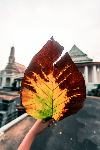 Leaf the hand