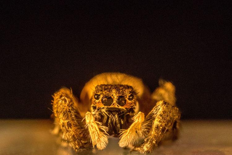 Close-up of spider against black background