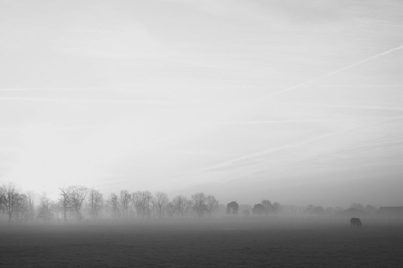 Black and white countryside winter landscape Beauty In Nature Cold Temperature Environment Field Fog Hazy  Idyllic Land Landscape Morning Nature No People Non-urban Scene Outdoors Plant Scenics - Nature Sky Tranquil Scene Tranquility Tree Winter