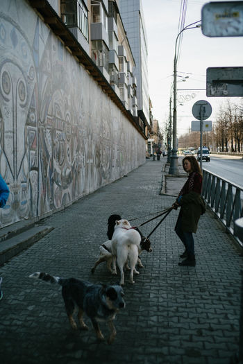 Dogs on street in city