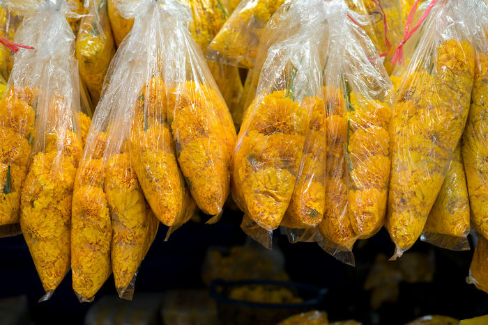 Bagged up yellow carnations hanging ready for sale at a wholesale flower market in Bangkok, Thailand. Bagged Carnation Carnations Wholesale Market Clear Plastic Close-up Flower Heads Flowers For Sale Freshness Market Offerings Repetitive Retail  Selection Wholesale Yellow Yellow Flowers