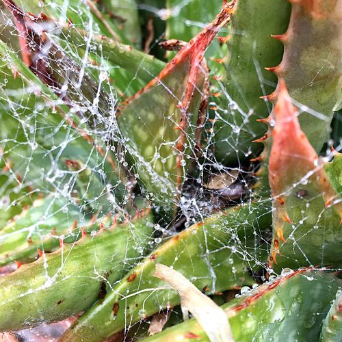 Vivid Colors Plants Cobweb Spider Webs Spiderweb Spider Web And Rain Dew Drops From My Point Of View My Perspective